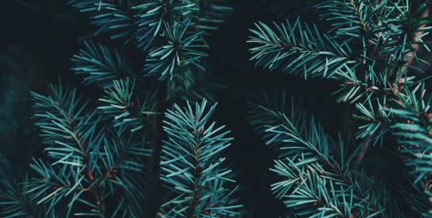 Limburg: Weihnachtsbäume werden nicht abgeholt